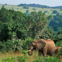 Shimba Hills elephants
